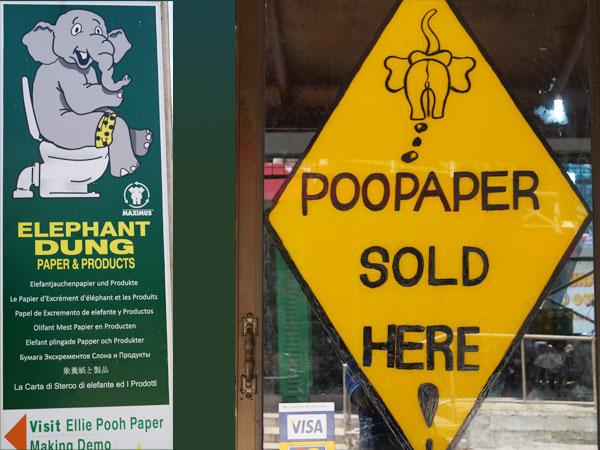 Elephant poopaper