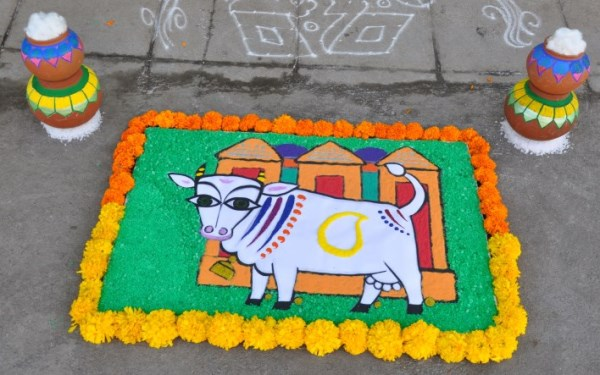 Rangoli for Sankranti by artist Anisha Raghu
