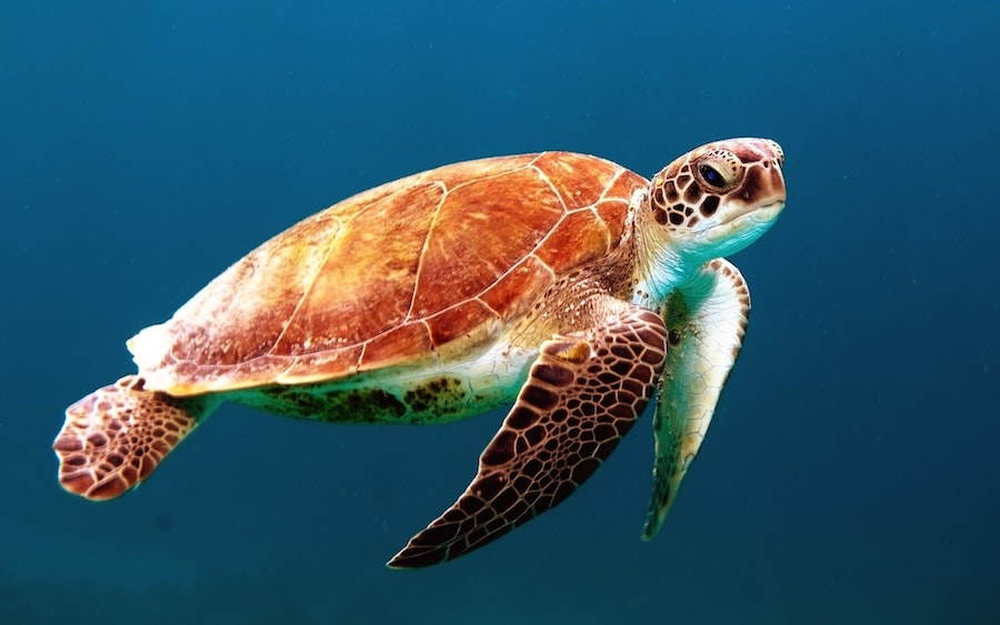Tortoise, Photo by Wexor Tmg, Unslpash
